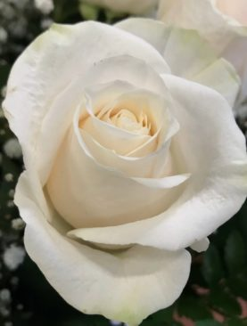 Rose bianche a numero