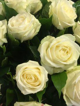Bouquet bianco di 25 rose avalanche
