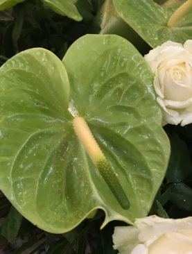 Cuscino di anthurium  e rose bianche avalanche