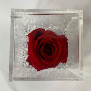 Rosa stabilizzata rossa Napoli