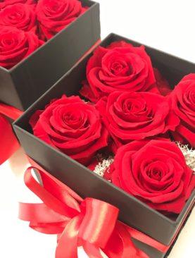 5 Rose stabilizzate Rosse