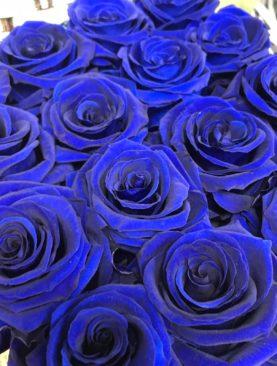 12 Rose stabilizzate blu