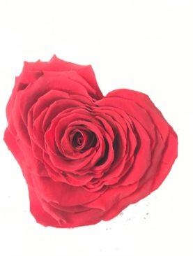 Rosa forma di Cuore - stabilizzata