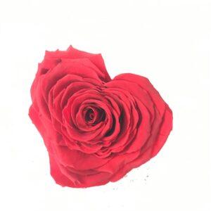 rose rosse a napoli