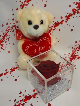 Rosa stabilizzata cubo cm 8X8 con Teddy peluche