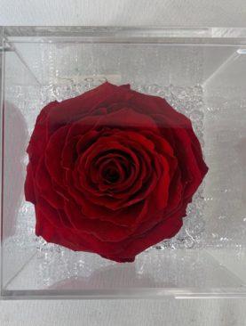 Rosa stabilizzata rossa XL