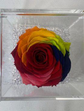 Rosa stabilizzata multicolore XL