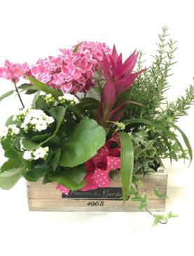Cesto di piante - misto rosa e bianco