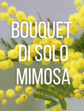 Bouquet di solo mimosa